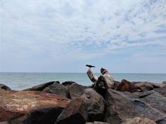 官方公布一加7 Pro海边摄鸟样张